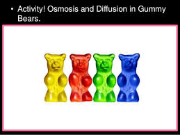 osmosis-gummy-bears