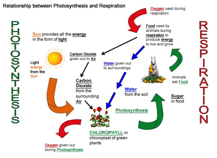 Mr bloch wwms room 312 7th grade science page 32 learning targets i can identify the products and reactants of photosynthesis ccuart Image collections
